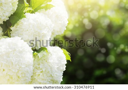 Photo of Spring or Summer Flower Over Green - stock photo