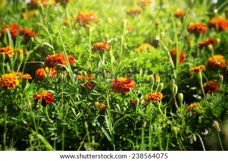 Photo of Spring or Summer Flower Over Natural Background - stock photo