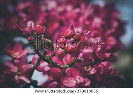 Photo of Spring Tree Pink Blossom  - stock photo