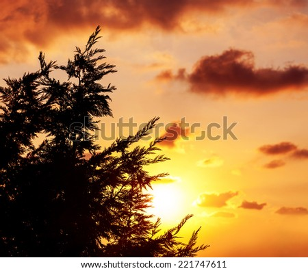 Photo of spruce tree silhouette over beautiful orange sunset, evergreen wood over sundown, fir forest, majestic forest in dusk, abstract autumn background, dark clouds in sky, pine tree border  - stock photo