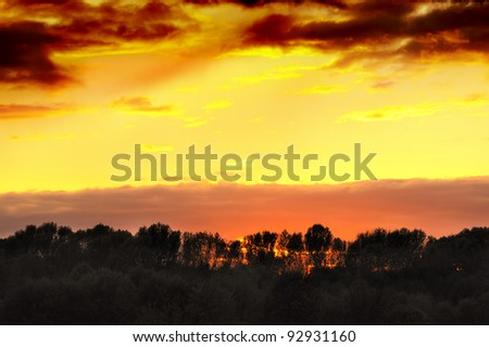 photo of sunset in forest