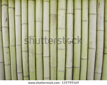 Photo of The Bamboo Background