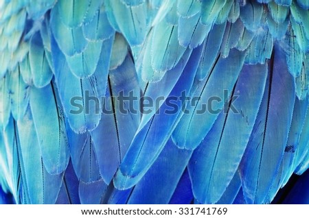 Photo of the Bird Turquoise Feather Background - stock photo