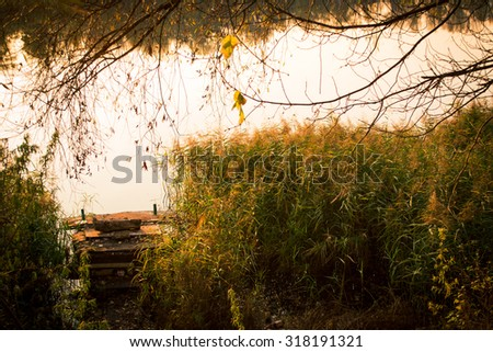 Photo of the Dais and water reed - stock photo