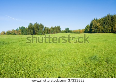 Photo of the field of green grass