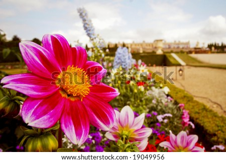 Photo of the flowers at the Palace of Versailles in Versailles France. - stock photo