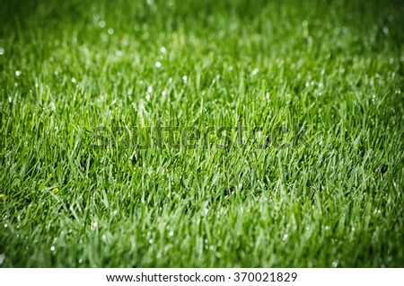 Photo of the Green Grass Background - stock photo