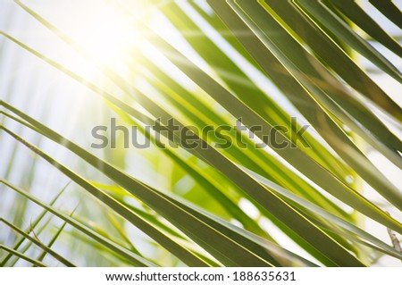 Photo of the Palm Leaves With Bright Sun - stock photo