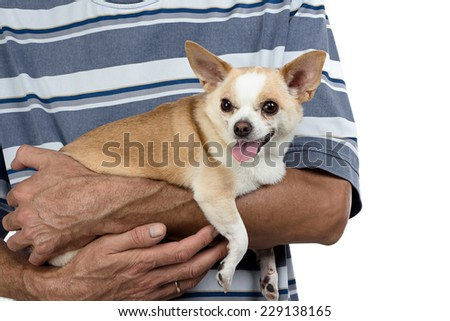 Photo of the small dog sitting on man's hands - close up photo