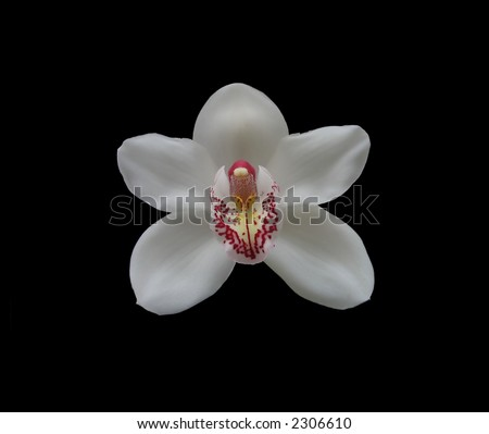 Photo of the white orchid (isolated on black) - stock photo