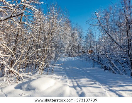 Photo of the winter forest. Road and trees covered with snow. Winter landscape, blue sky, bright sunny day. Russia. - stock photo