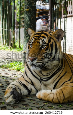 Photo of tiger cub. - stock photo