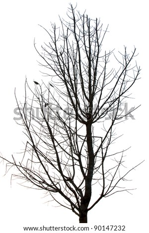 Photo of tree silhouette - stock photo