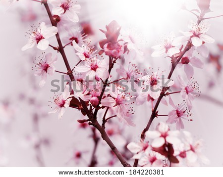 Photo of Tree Spring Blossom Flower Background
