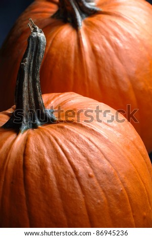 Photo of two large pumpkins.  Focus is on first pumpkin. - stock photo