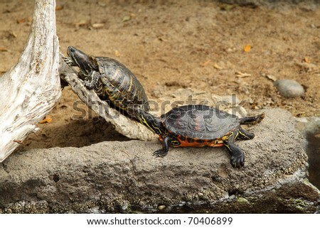 Photo of two turtles in the zoo - stock photo