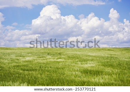 Photo of Wheat Field Landscape  With Blue Sky - stock photo