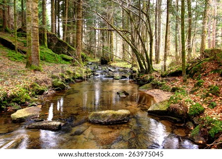 Photo of wild forest landscape with a brook and subtle light. Wild landscape