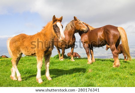Photo of wild horses against the clouds - stock photo