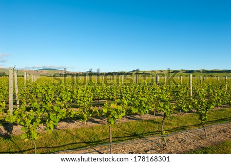 Photo of winery from South Island of New Zealand - stock photo