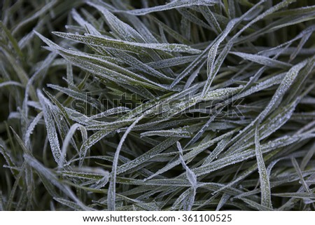 Photo of winter nature with icy grass - stock photo