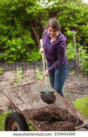Photo of woman fertilizing garden bed with compost from wheelbarrow - stock photo