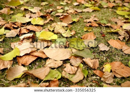 Photo of yellow and brown autumn leaves lying on green grass. Fall leaves on a lawn.