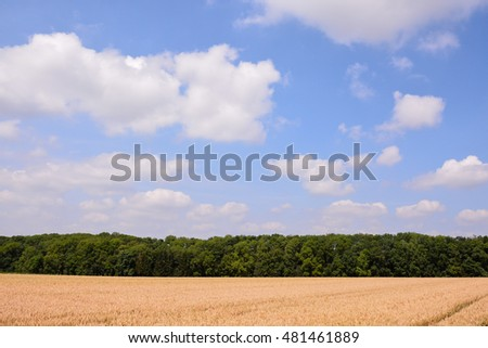 Photo Picture View of Cultivated Field in the countryside