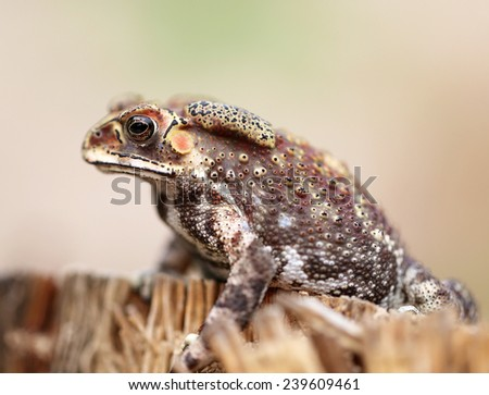 photo portrait of an exotic tropical frogs  - stock photo