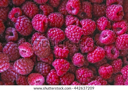 Photo ripe raspberry macro close-up of