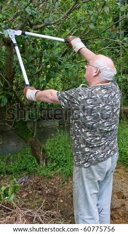 photo senior male cutting trimming tree branches outside - stock photo
