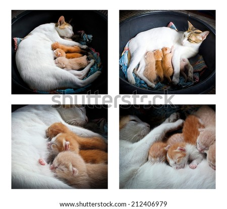 Photo Set of Cat nursing her kittens. Mother cat with a kittens - stock photo