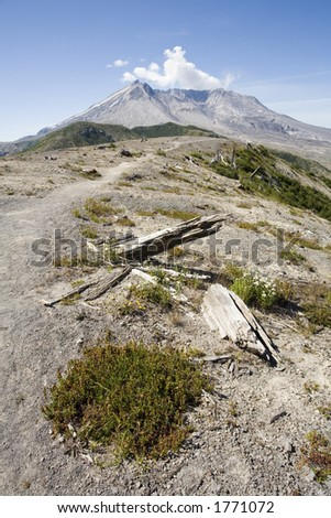 Photo showing the re-birth of vegetation at Windy Ridge, an area that was destroyed by the eruption of Mt. St. Helens. - stock photo