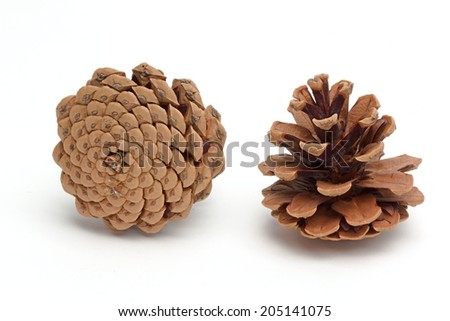 Photo shows detail of brown cones on a white background. - stock photo