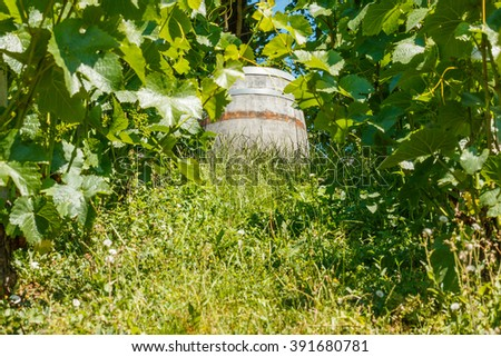 Photo shows detailed view of wooden wine barrel in the green vineyard during a day. - stock photo