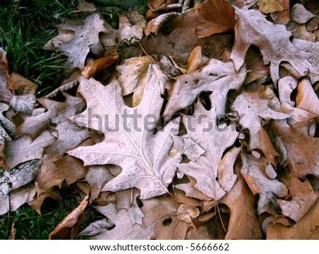 Photo taken of frosty fallen leaves in a park in Berlin. - stock photo