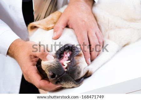 Photo veterinarian checks the teeth of a dog that is on the table