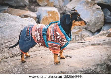Photo winter dog. - stock photo
