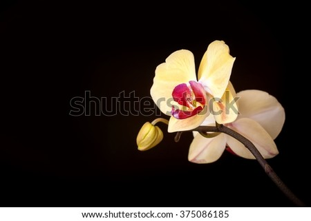Photo yellow orchid on a dark background