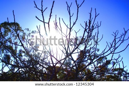 Photograph featuring a tree without its leaves on a crisp Autumn morning in the Clare Valley Wine region of South Australia. - stock photo