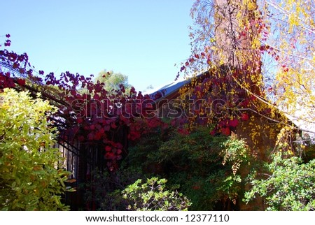 Photograph featuring colourful autumn trees at Leasingham Estate Wines in the Clare Valley Wine Region of South Australia. - stock photo
