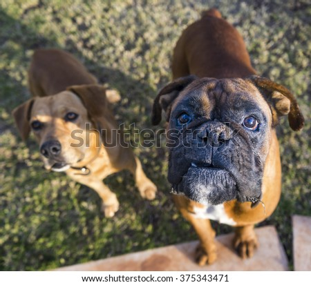 photograph of a dogs waiting - stock photo