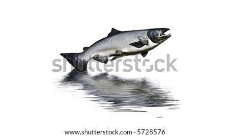 Photograph of a large model salmon with reflected water added - stock photo