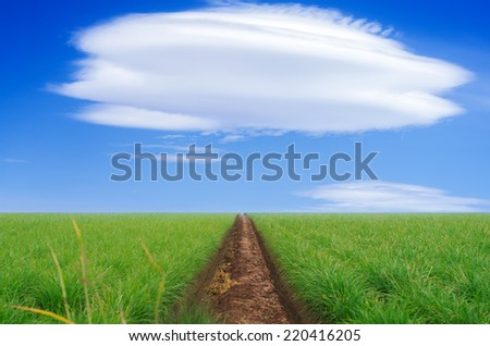 photograph of a path through the garden to the clouds - stock photo