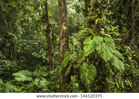 Photograph taken deep inside the Monteverde Cloud Forest in Costa Rica. - stock photo