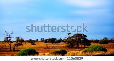 Photograph taken in the Mallee Desert featuring desert vegetation under a stormy sky (South Australia) - stock photo