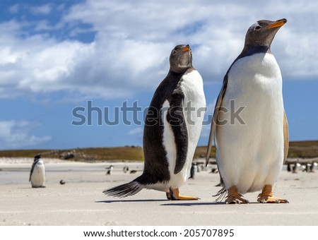 Photographed at North Pond, in the north coast of East Falkland.  - stock photo