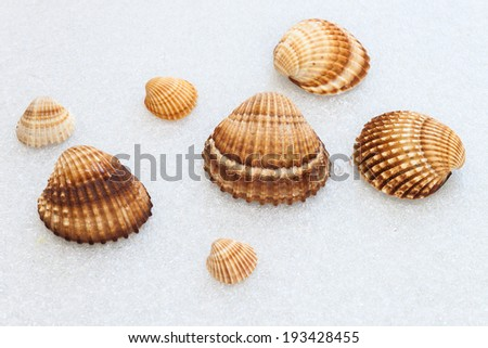 Photographed composition of sea shells
