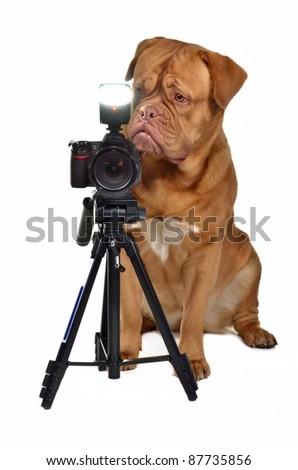 Photographer dog with camera, isolated - stock photo