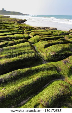 photographer sanpshotted seaweed on the rock - stock photo
